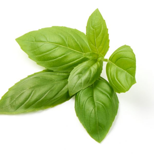Photo showing basil leaf