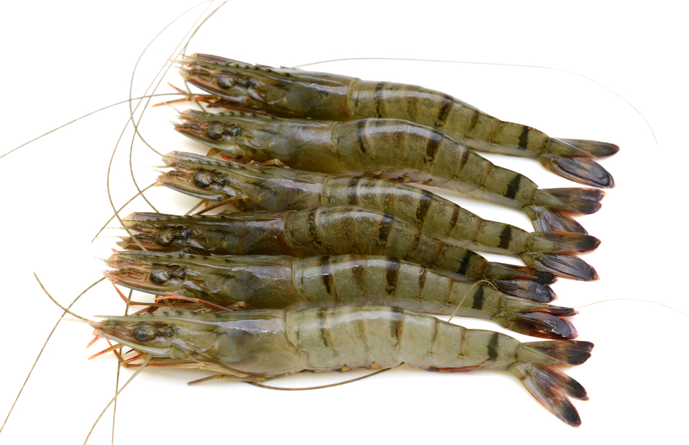 Photo showing tiger prawns