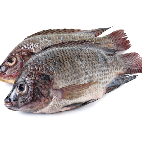 Photo showing tilapia