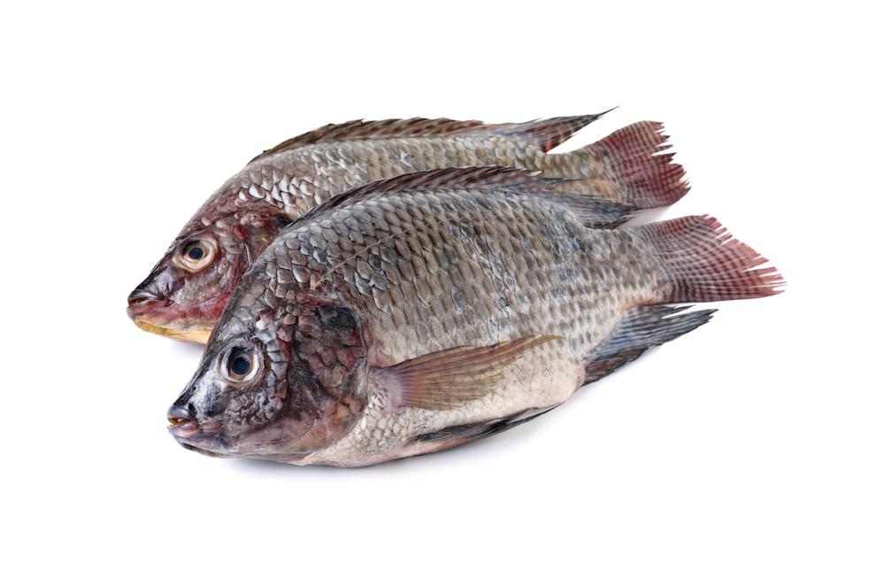Photo showing tilapia