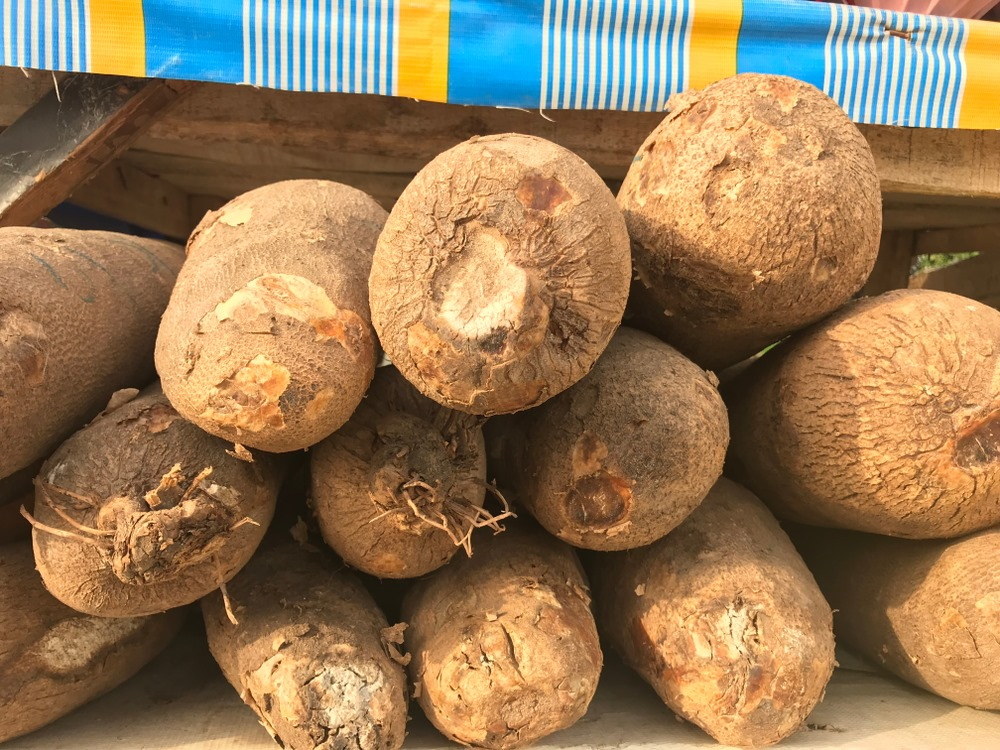 Photo showing tubers of yam