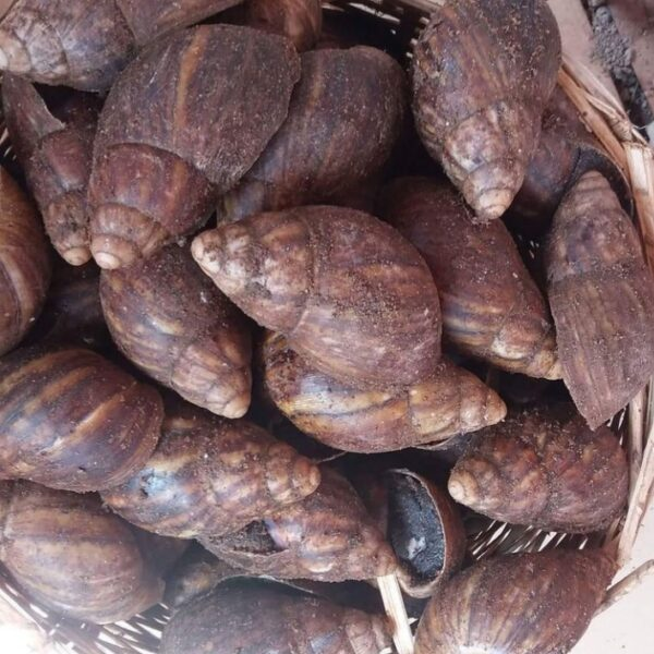 Snails in Abuja